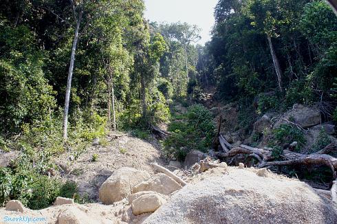 Оползень в джунглях и отсюда отличный вид на море