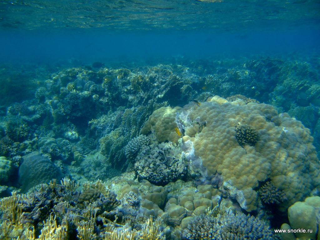 Вид поверх коралловой отмели, слева от бухты.