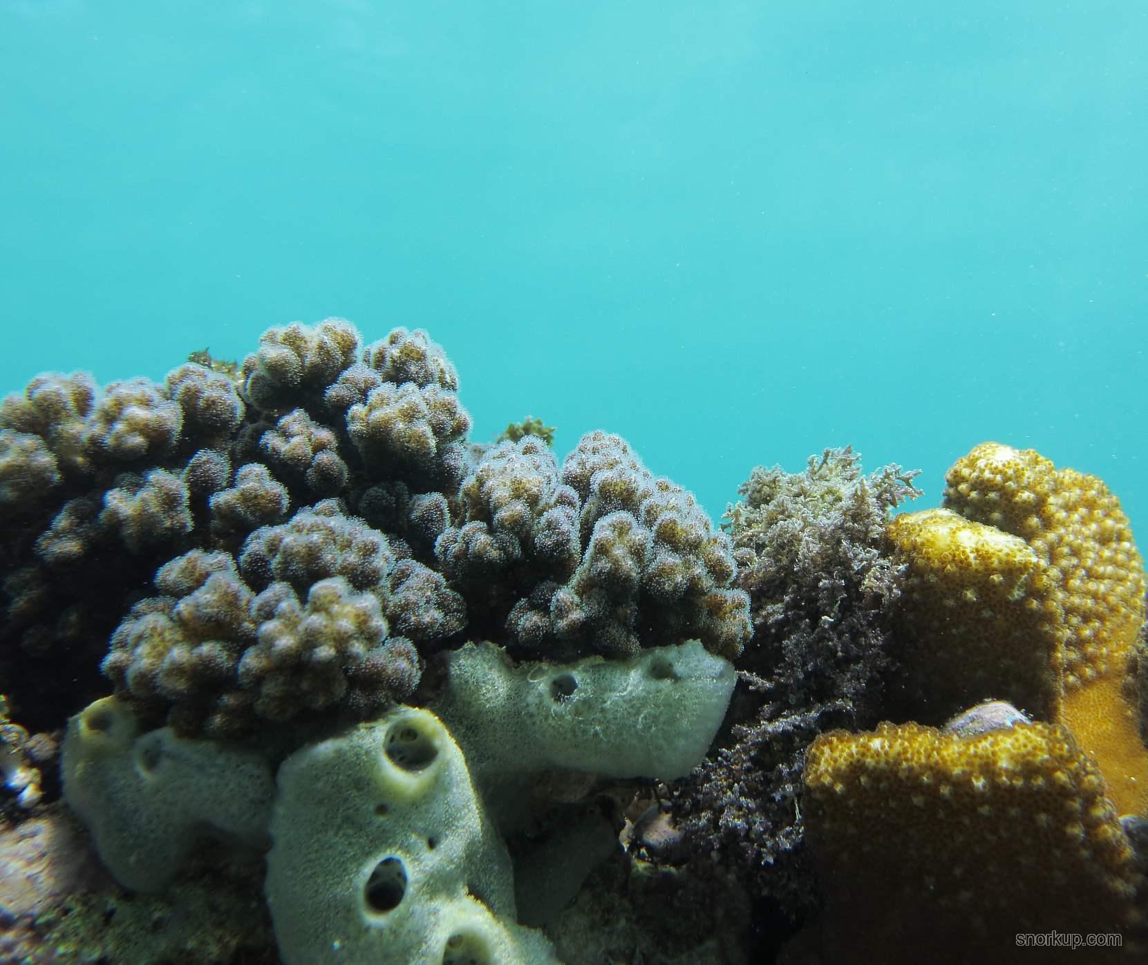 Белёсые внизу: губки Clathrina coriacea ?